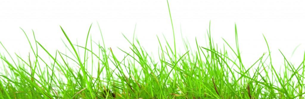 Achtergrond-gras-5.jpg