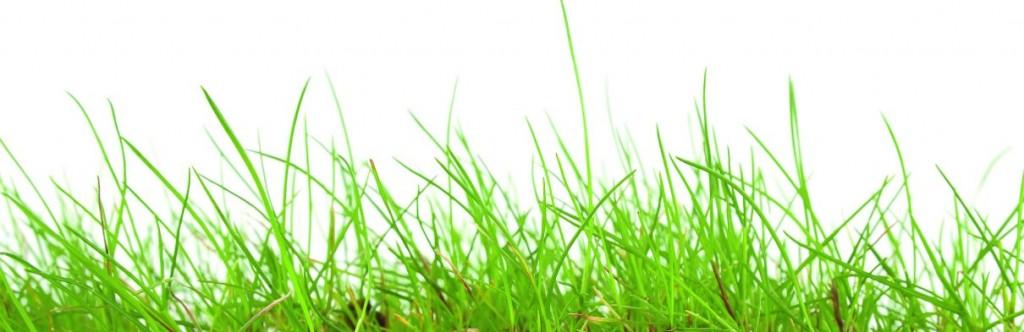 Achtergrond gras nieuwsbrief
